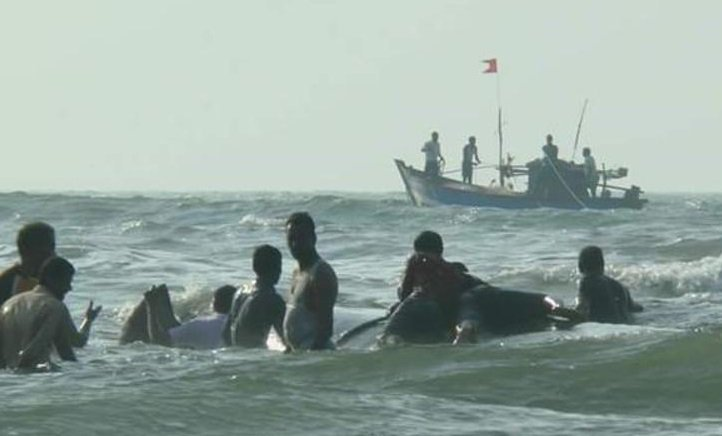In Pictures: 40-Feet-Long Whale Saved After A Nine-Hour Long Operation In Maharashtra