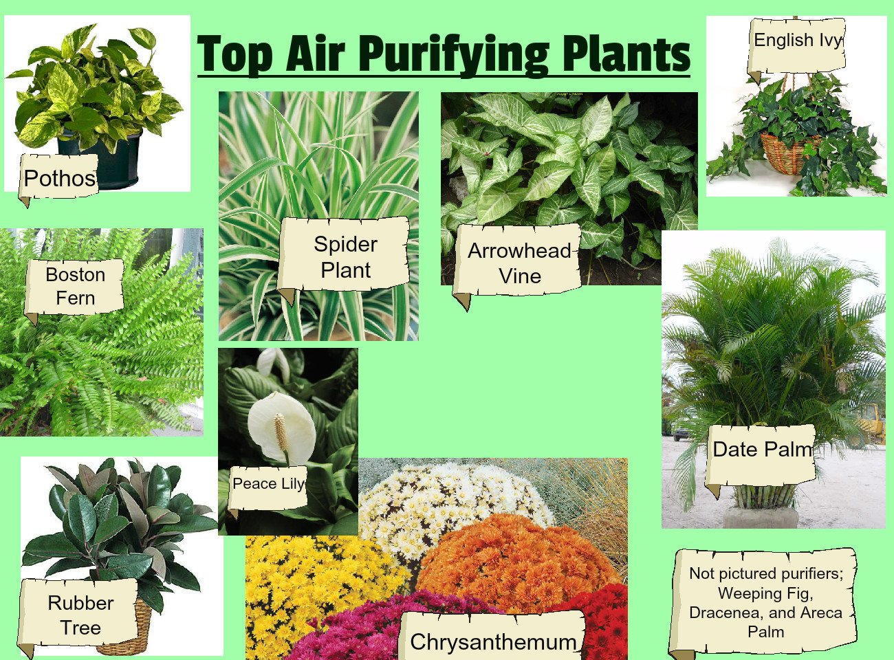 Best Air Cleaning Plants That Help You To Keep Indoor Air Fresh As Recommended By NASA