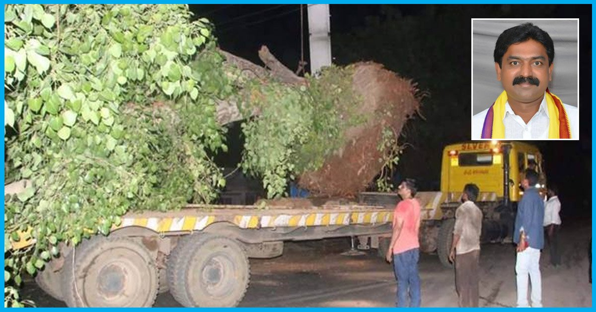 Upset By Trees Being Cut Down, Andhra MLA Translocates Trees By Spending His Own Money