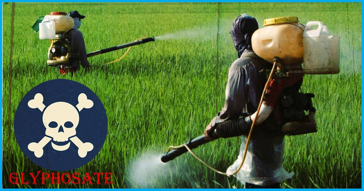 Weedicides Containing Glyphosate, Used In Farming, Can Cause Cancer; Recent Study Confirms