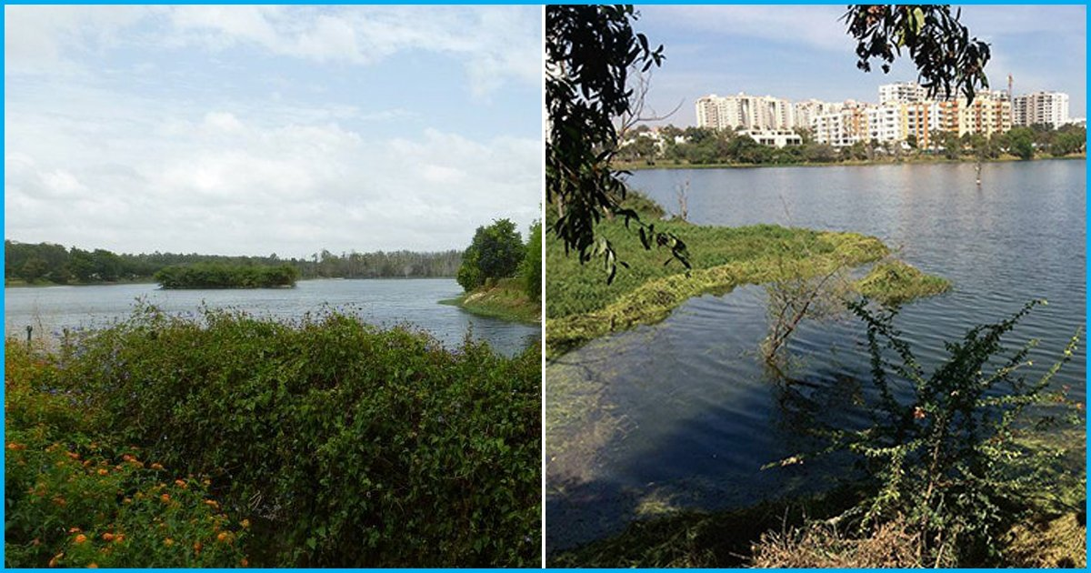 Bangalore Development Authoritys Revised Master plan 2031: Reduced Forest Cover And Encroached Lakes