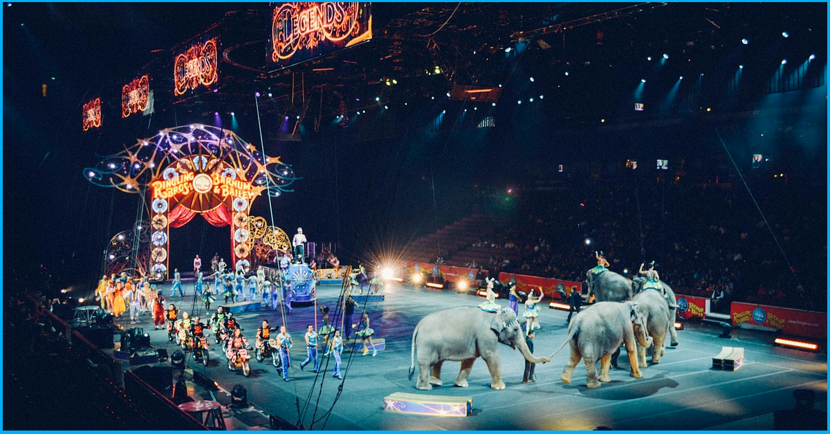 Centre Proposes To Ban The Use Of All Animals In Circuses