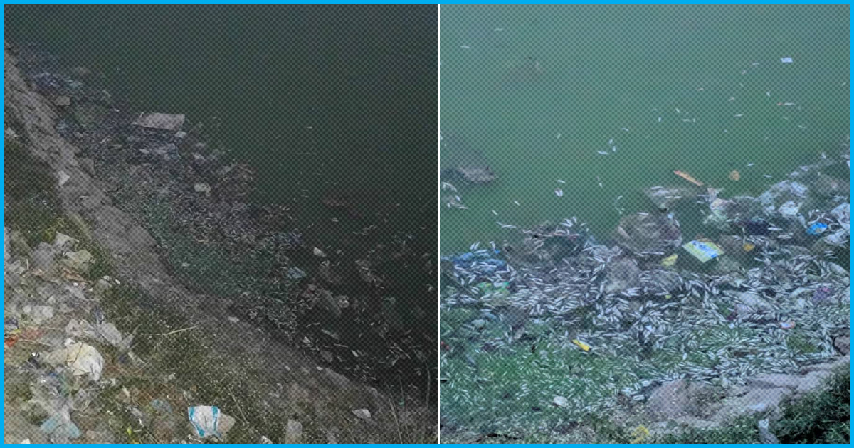 Bengaluru: Hundreds Of Dead Fishes Found Floating On The Surface Of Seegehalli Lake
