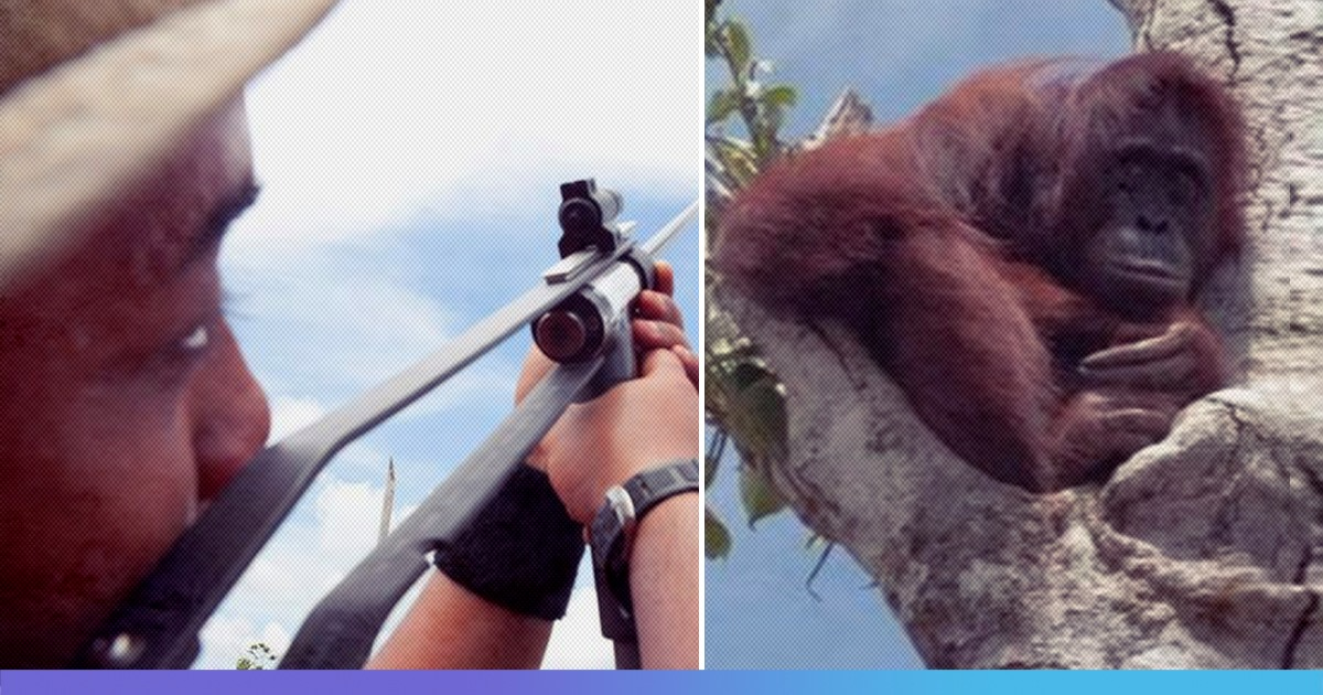 Starving, Pregnant Orangutan Desperately Clings To Last Tree As Bulldozers Destroys Her Forest
