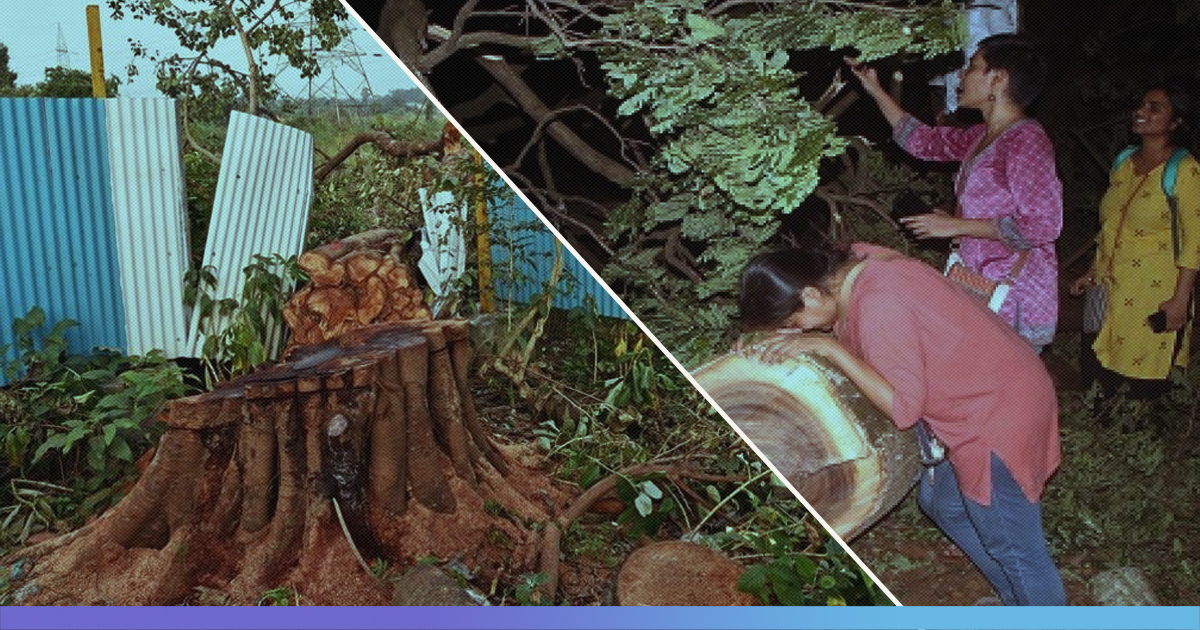 8 Reasons Why Felling Of 2141 Trees In Aarey Is Alarming For Mumbaikars