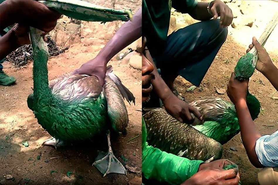 This Is How The Birds And Animals Are Being Treated Inside A Biological Park
