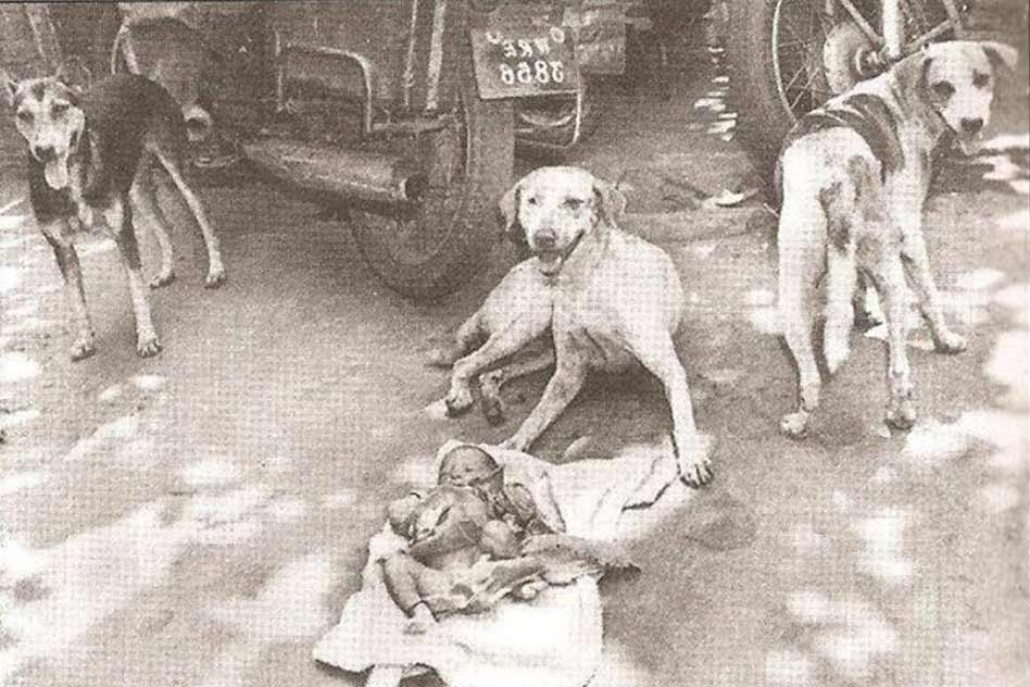 The Story Of 3 Street Dogs Protecting An Abandoned New Born Baby