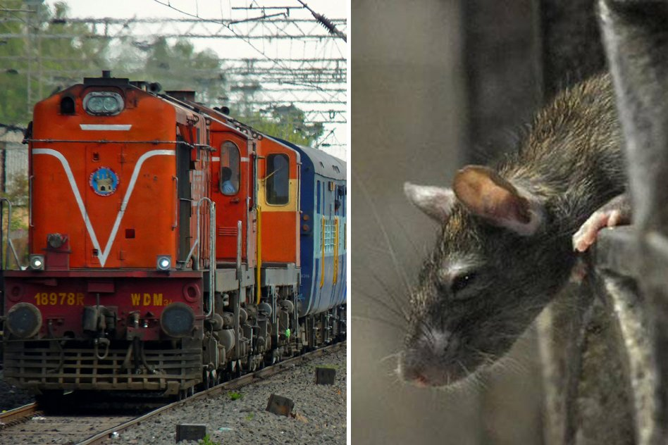 Bitten By Rat, Train Passenger Suffers For 11 Hours Without Any Medical Aid