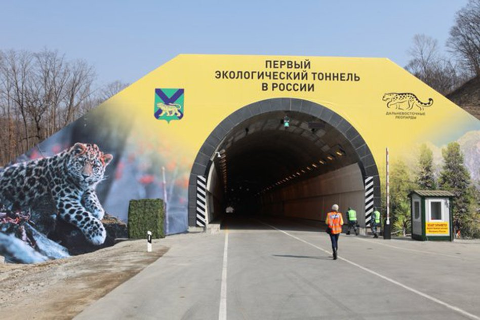 Russia Builds A 1900-Foot Tunnel For Safe Passage Of Endangered Group Of Leopards, Tigers
