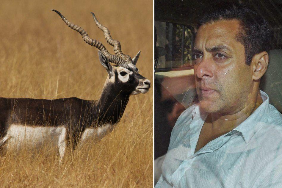 Rajasthan HC Acquits Salman Khan In Blackbuck Poaching Case
