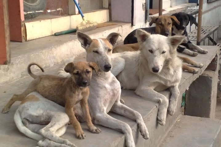 Kerala May Not Have Handled Stray Dogs Well, But Thats No Reason to Hate The State