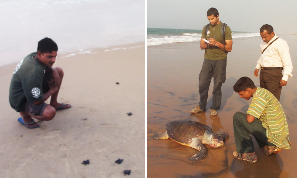 Meet Bichi Bhai, A School Dropout From Odisha Who Has Saved Millions Of Ridley Turtles