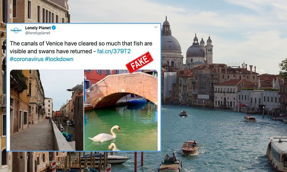 Fact-Check: No, Dolphins, Swans Did Not