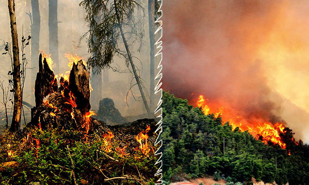 Significant Amount Of Worlds Largest Tropical Wetland Lost Due To Brazil Fires, Say Scientists