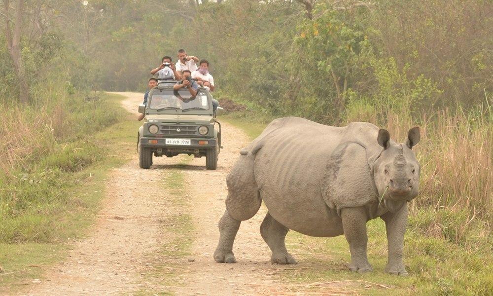 Assam: Kaziranga National Park Gets 3,000 Hectares Additional Land To Reduce Human-Wildlife Conflict
