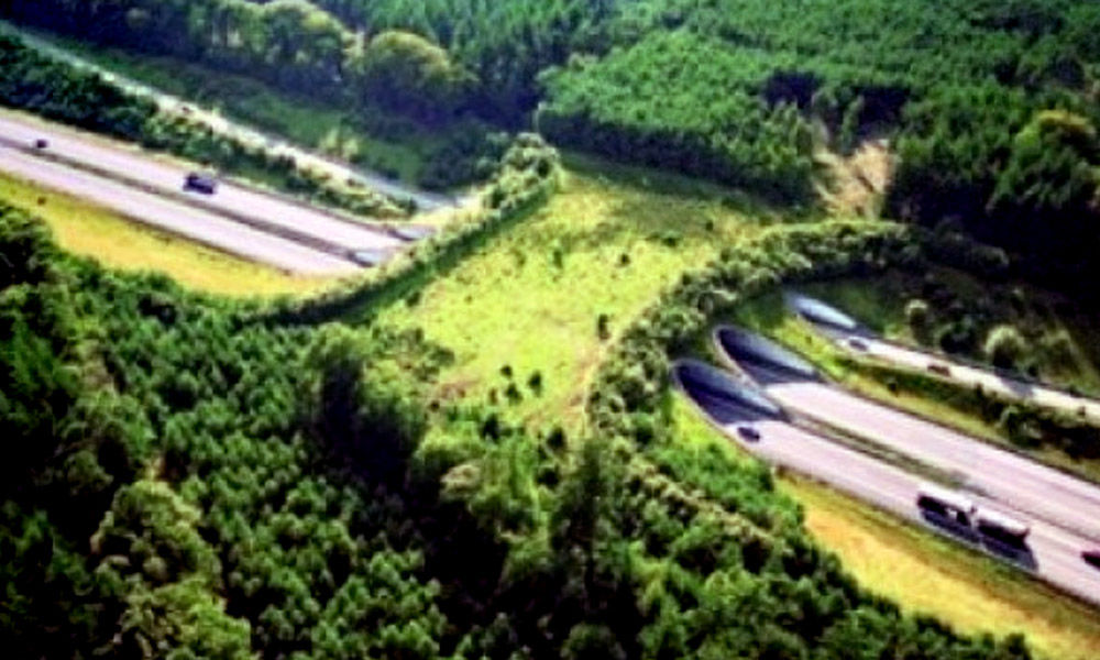 India To Follow Netherlands, Will Soon Have Animal Bridges For Safe Passage Of Wildlife