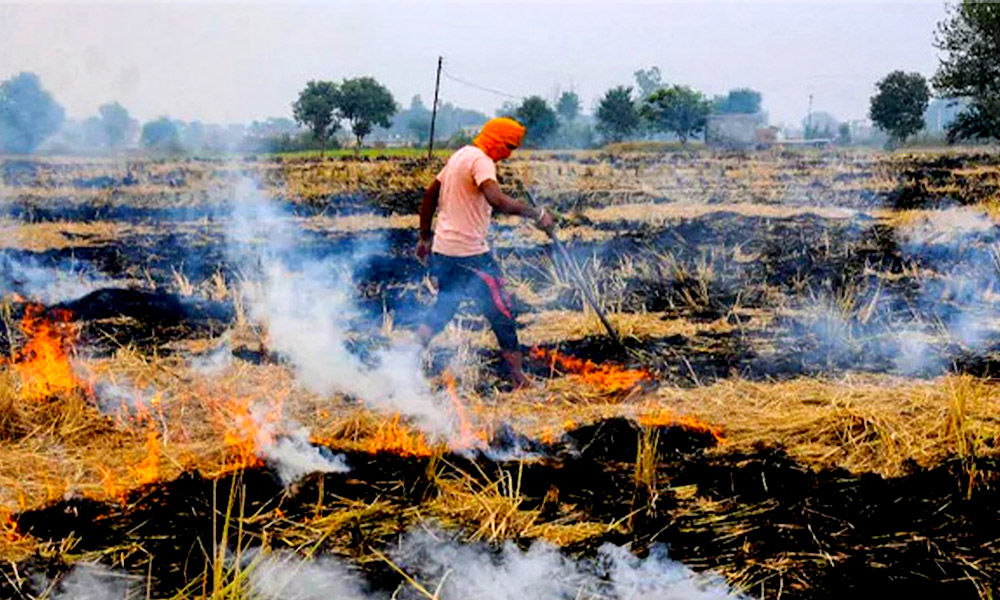 Punjab: 1,200 Cases Of Stubble Burning In Two Weeks, Five Times Of Last Kharif Harvest