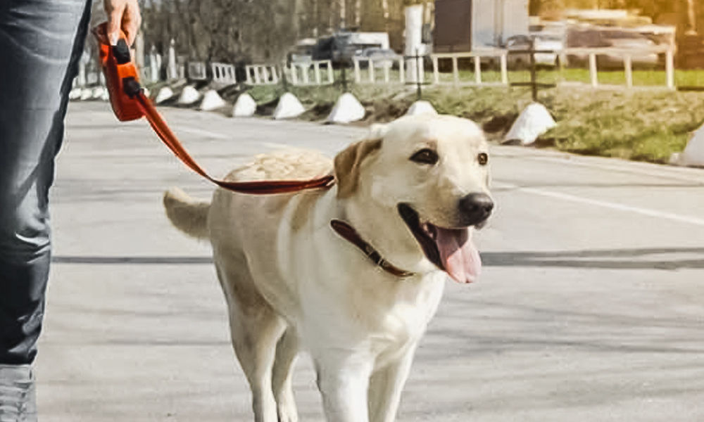 Mumbai: Pet Dog Saves Owner From Being Sexually Harassed By Stalker