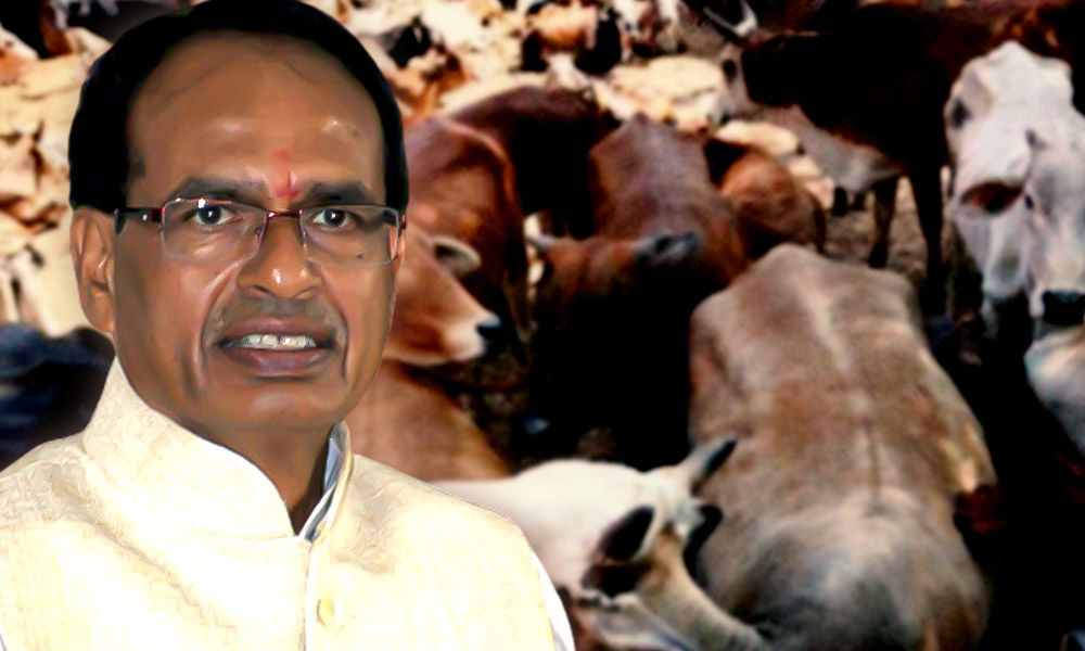 After Cow Cabinet, Madhya Pradesh Govt Now Plans To Collect Gau Cess
