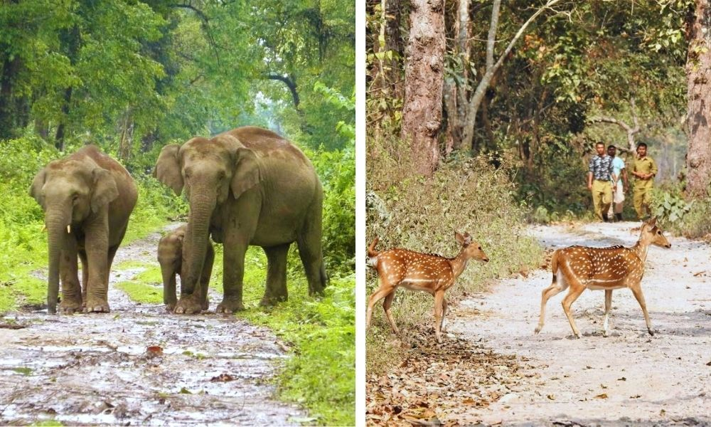 Now, Assam Has Second-Highest Number Of National Parks In India