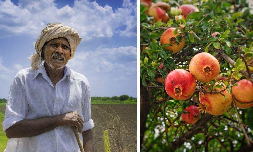 Three Centres Of Excellence Inaugurated In Karnataka Under Indo-Israel Agricultural Project