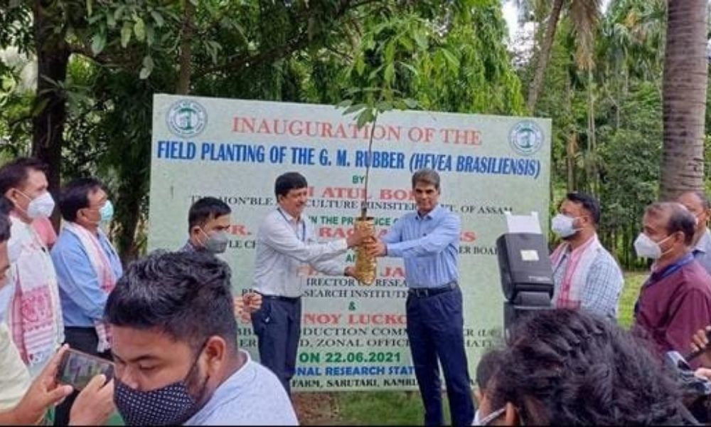 Assam: Worlds First Genetically Modified Rubber Planted In Guwahati