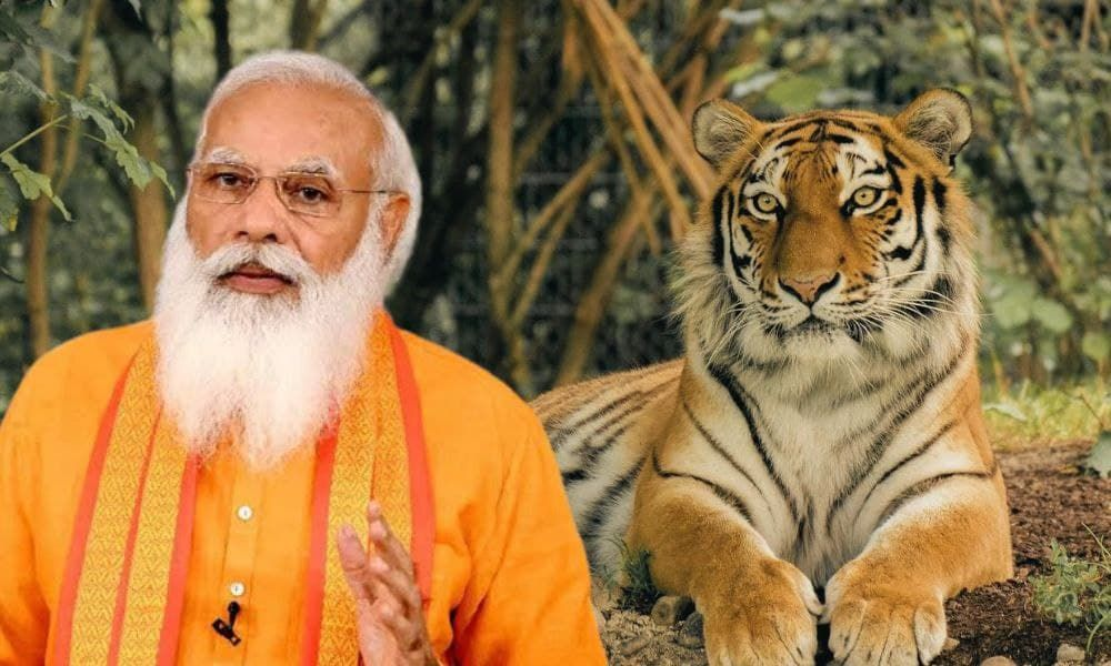 India Has Achieved Target Of Doubling Tiger Population 4 Years Ahead Of Schedule: PM Modi
