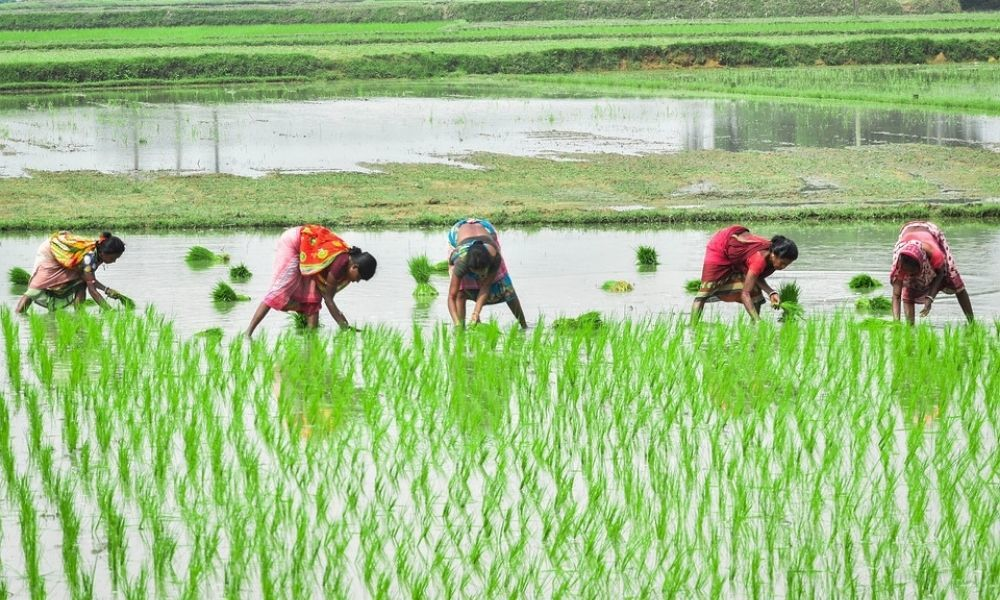 States To Incur 30% Expenditure On Women Farmers