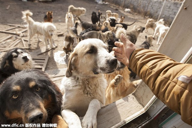 changchun_dog_lover7
