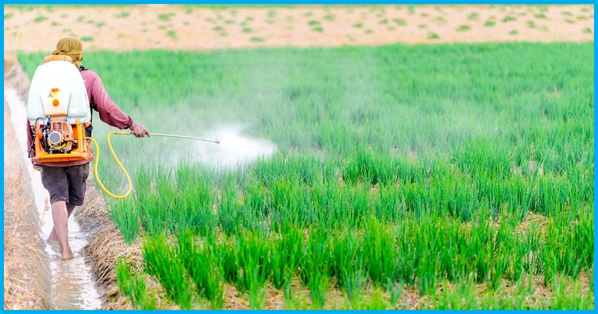 Punjab Government Bans Sale Of 20 Pesticides In The State; Know About Them